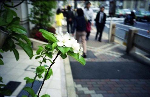 2007_04_26_ricoh_r1_030_17