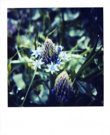 2007_05_01_polaroid_sx70_001_09