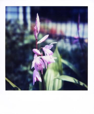2007_05_01_polaroid_sx70_001_10