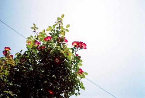 2007_05_04_minolta_twin28_004_031