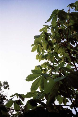 2007_05_04_minolta_twin28_005_12a