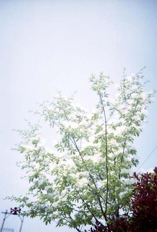 2007_05_05_clearshot_u_006_19a