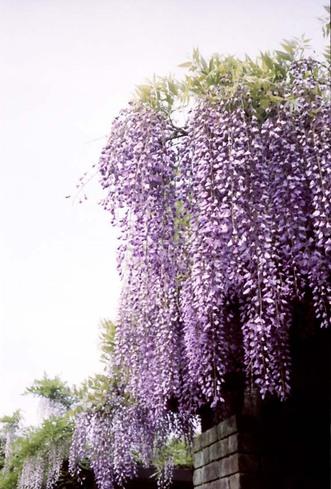 2007_05_05_minolta_twin28_005_22a