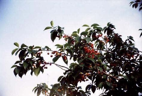 2007_05_06_belomo_vilia_002_15a