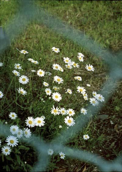 2007_05_10_penf_028_15a