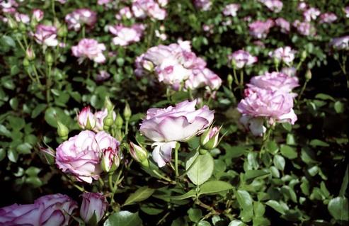 2007_05_11_nikon_f80s_109_14