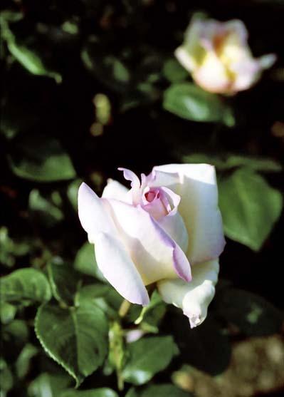 2007_05_11_penf_029_24a