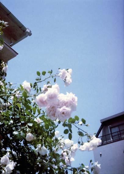 2007_05_26_pen_ee3_013_11