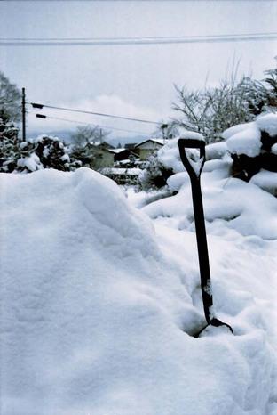 2008_01_16_nikon_f80s_167_18