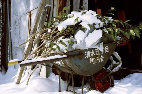 2008_01_16_nikon_f80s_168_16