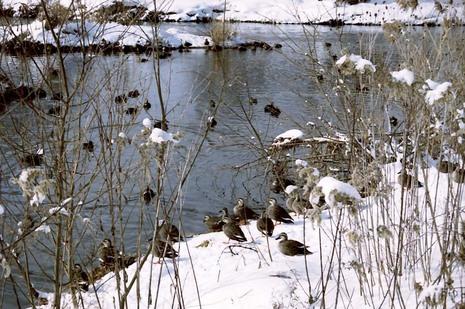2008_01_16_nikon_f80s_168_36