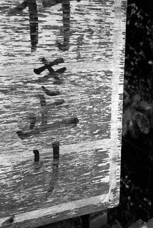 2008_02_07_nikon_f80s_173_07