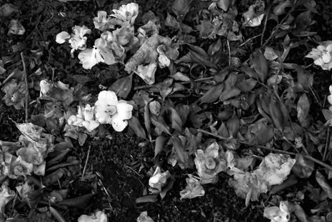 2008_02_07_nikon_f80s_173_33