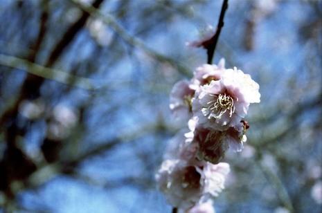 2008_03_16_nikon_f80s_189_14