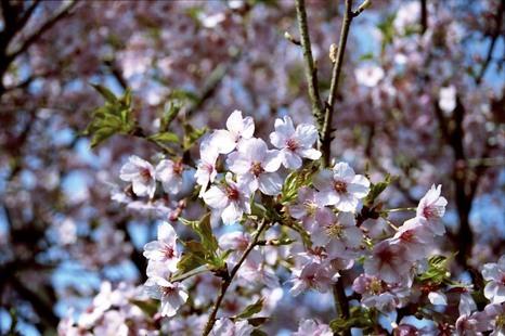 2008_03_16_nikon_f80s_189_17