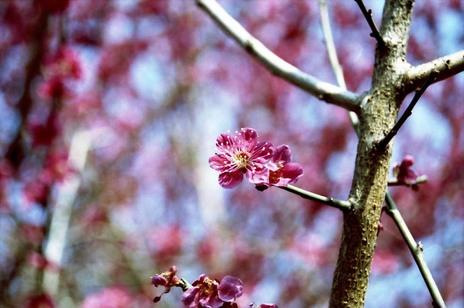 2008_03_16_nikon_f80s_189_20