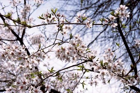 2008_03_29_nikon_f80s_194_18