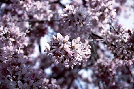 2008_03_29_nikon_f80s_194_19