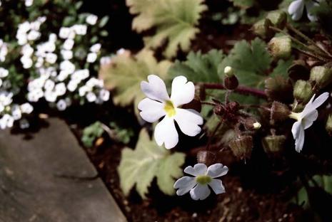 2008_03_25_nikon_f80s_190_13