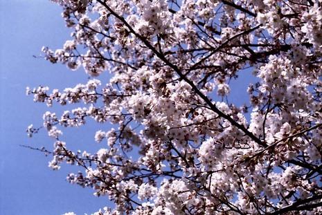 2008_03_25_nikon_f80s_190_15