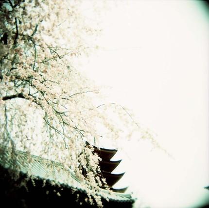 2008_04_02_holga_038_02
