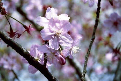 2008_04_04_nikon_f80s_207_26