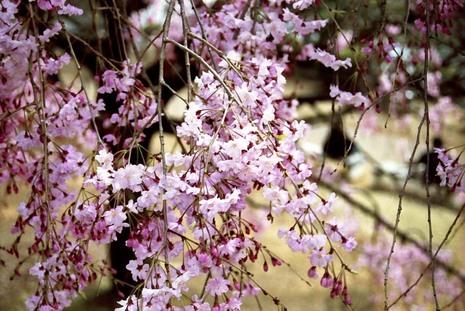 2008_04_04_nikon_f80s_208_03