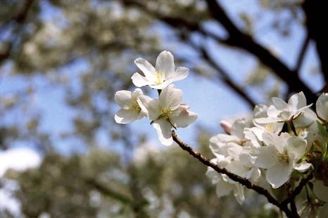 2008_04_04_nikon_f80s_208_06