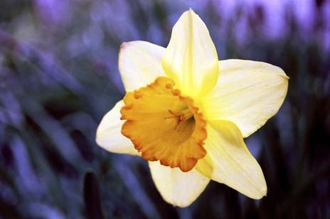 2008_04_04_nikon_f80s_208_11