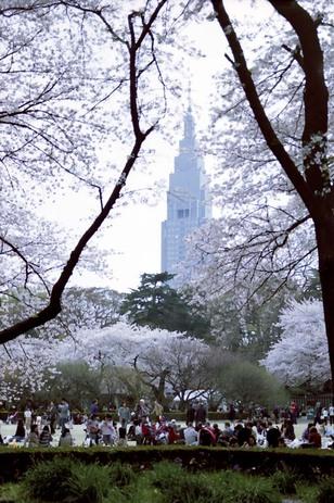 2008_04_04_nikon_f80s_208_29