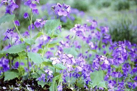 2008_04_04_nikon_f80s_208_30