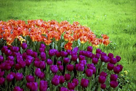 2008_04_19_nikon_f80s_209_05