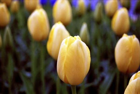 2008_04_19_nikon_f80s_209_06