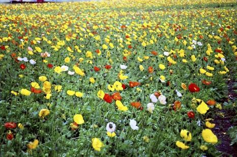 2008_04_19_nikon_f80s_209_10