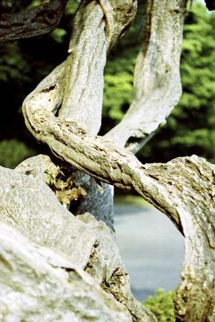 2008_04_22_nikon_f80s_210_20