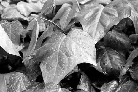 2008_05_03_nikon_f80s_217_06
