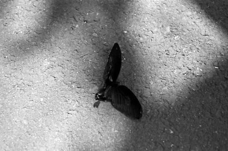 2008_05_06_nikon_f80s_220_10_2