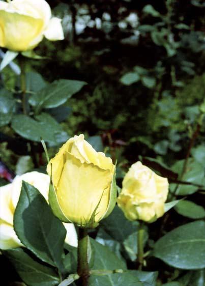 2008_05_15_penf_034_01a