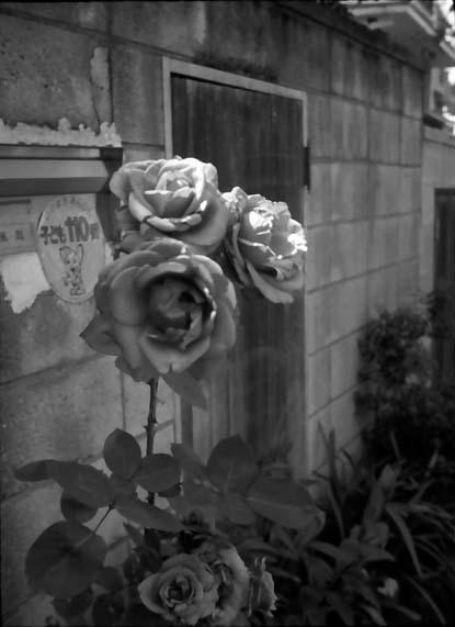 2008_05_21_fujicahalf_009_24a