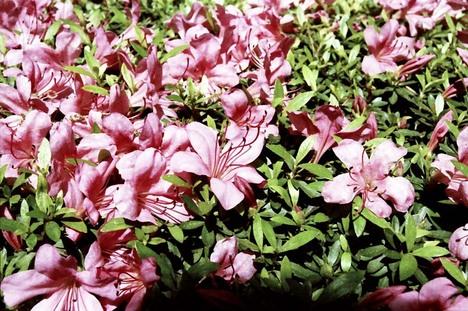 2008_05_23_nikon_us_004_03
