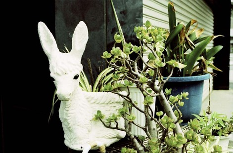 2008_05_25_nikon_us_005_23