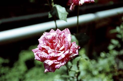 2008_06_13_nikon_us_014_03
