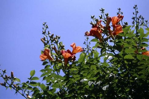 2008_06_13_nikon_us_015_22