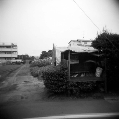 2008_06_15_holga_041_12
