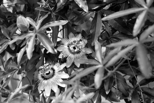 2008_07_02_nikon_f80s_236_32
