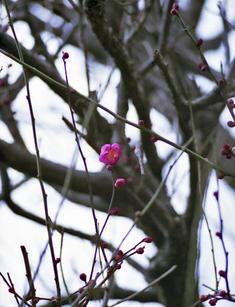 s2006_feb_08_pen_f_01a