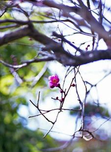 s2006_feb_08_pen_f_04